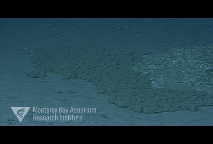 aggregation of dead radiolaria on the seafloor