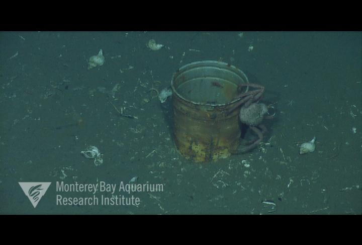 Representative image using: 1-gallon paint bucket
